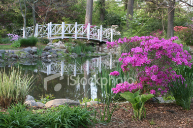 ist2_6021681-magical-garden-scene-small