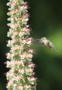 1196hummingbirdsmall